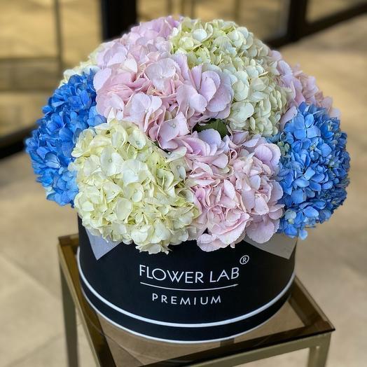 Цветы в коробке Гортензии