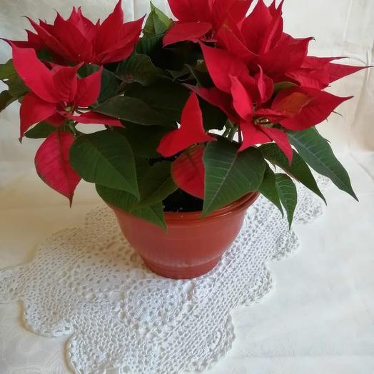 Комнатное растение и мыло ручной работы в подарок