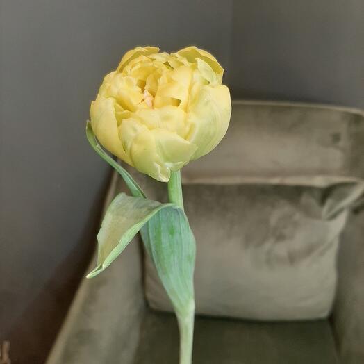 Тюльпан ду Еллоу Маргарита