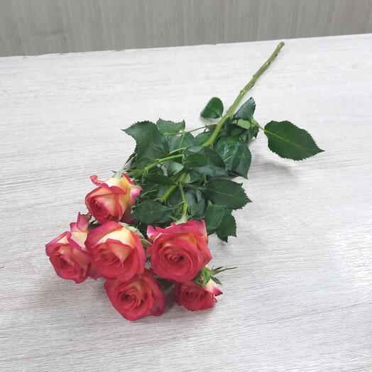 Кустовая роза Summer dance