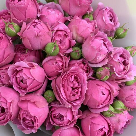Роза пионовидная, Мисти Баблс