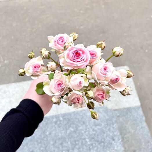 Роза кустовая Баттен Бабблс 80см