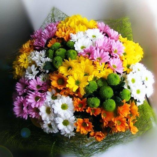 11 кустов хризантем
