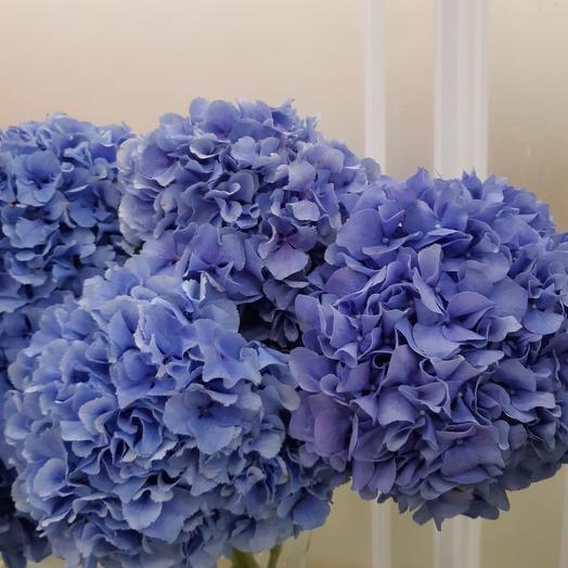 Гидрангия: букеты цветов на заказ Flowwow
