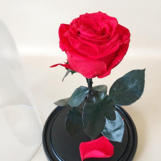 Роза в колбе стандарт красная