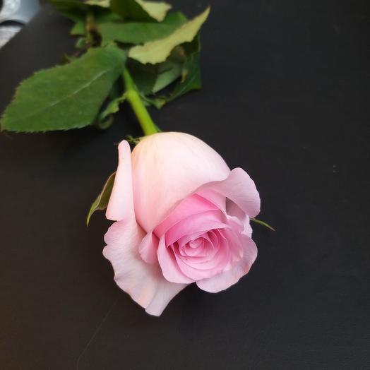 Роза Nena