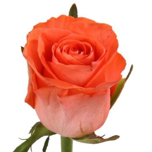 Коралловая Роза 50 см