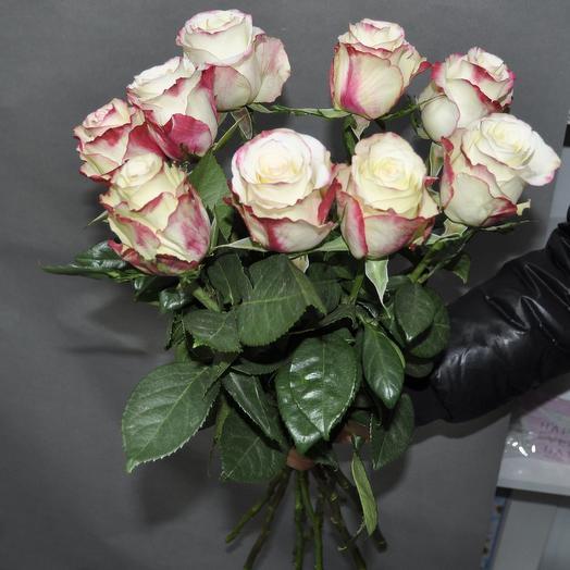 Розы Sweetnes ( Свитнес) 60 см. 9 шт