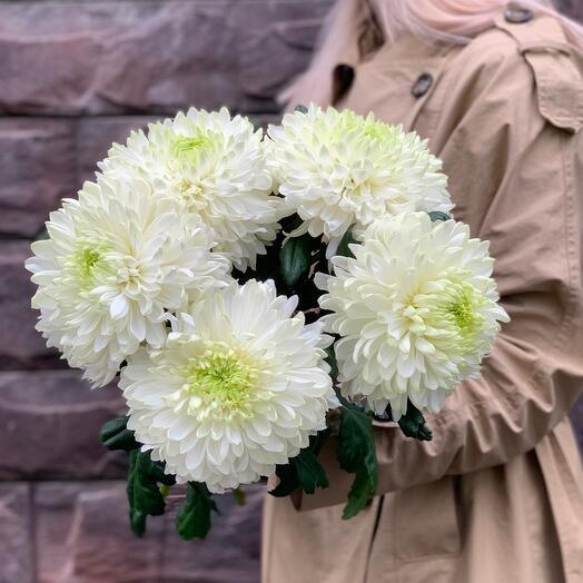 Шикарные гигантские хризантемы в букете «Невесомость»