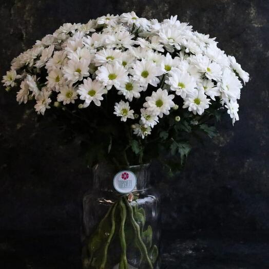15шт Хризантема ромашка