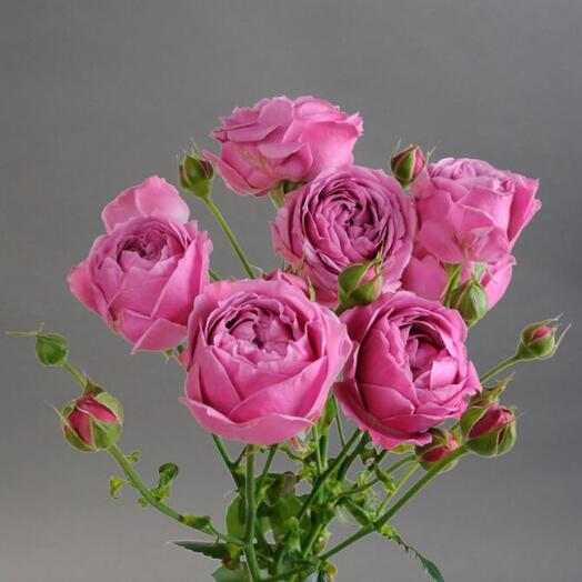 Мисти Баблс пионовидная роза-штучно (количество любое) цена за ветку