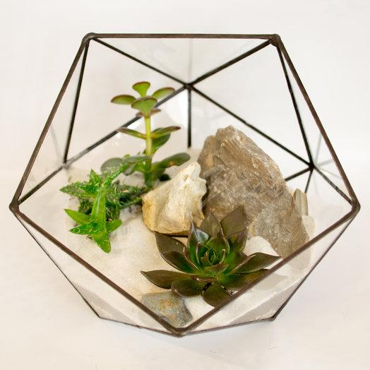 Флорариум в икосаэдре с суккулентом: букеты цветов на заказ Flowwow