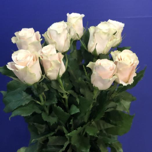 9 кремовых роз: букеты цветов на заказ Flowwow