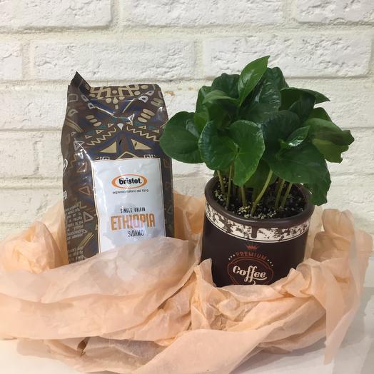 Мечта кофемана: букеты цветов на заказ Flowwow