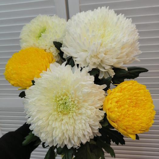 Ароматные хризантемы микс🤗