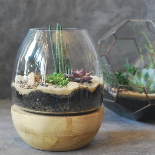 Флорариум с суккулентами на деревянной подставке