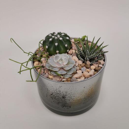 Садик из кактусов. Композиция в стекле 1