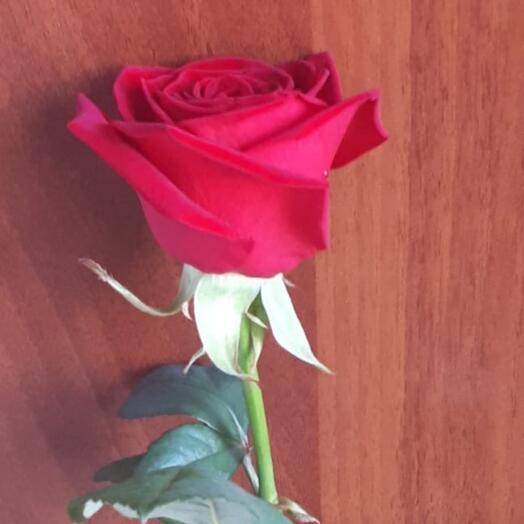 Роза Ред Наоми 80 см