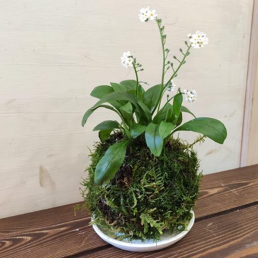 Кокедама NEZABUDKA: букеты цветов на заказ Flowwow