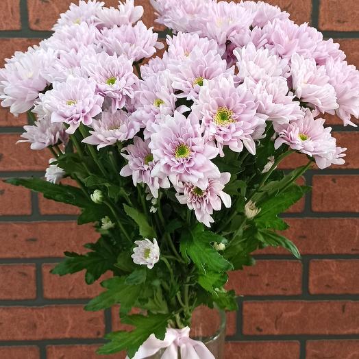 Хризантема розовая: букеты цветов на заказ Flowwow