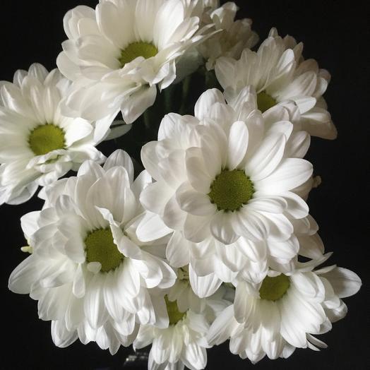 Хризантема Белая. Романтика