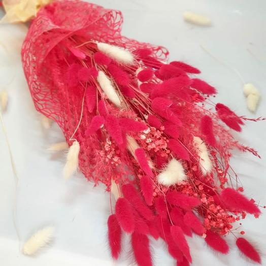 Лагурус красный