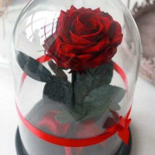 Роза в колбе Premium Бордовая