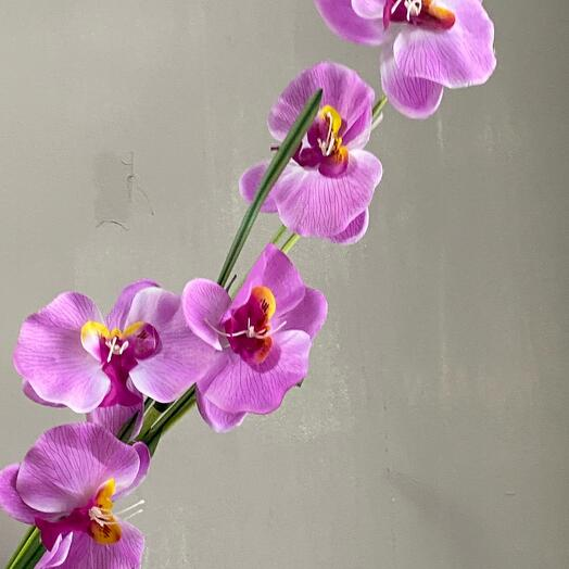 Орхидея декоративная