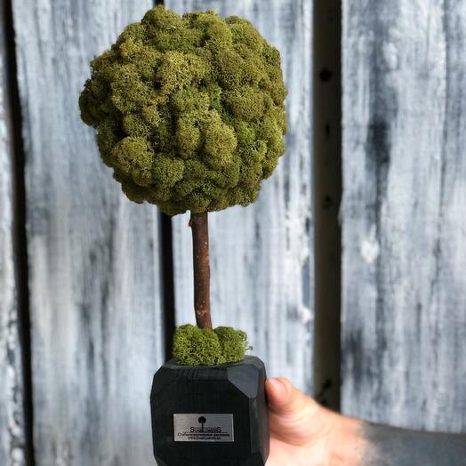 Топиарий стабилизированный мох