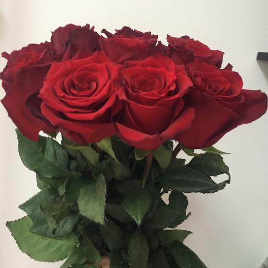 Роза эксплорер 9 шт