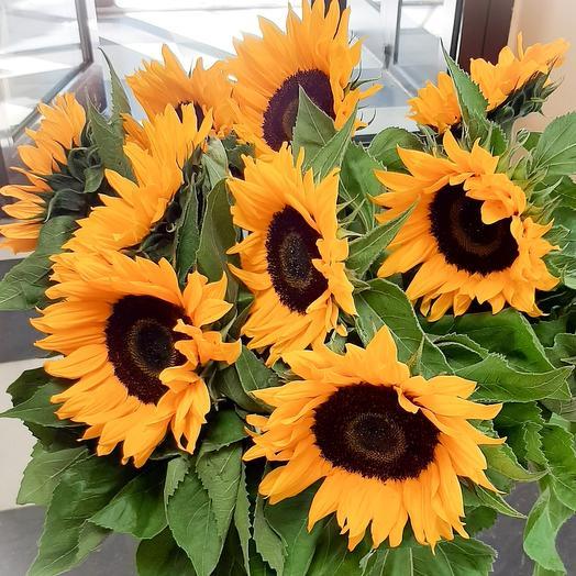 Подсолнух: букеты цветов на заказ Flowwow