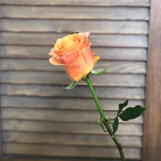 Роза Карп Диме 40см