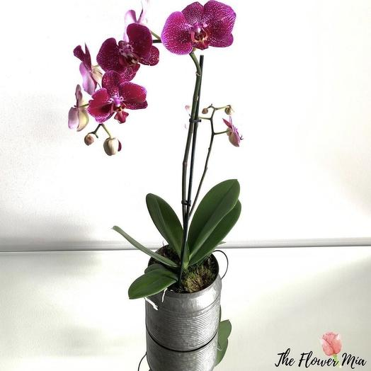 Orchids: flowers to order Flowwow