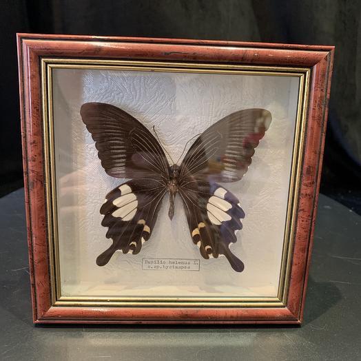 Бабочка в рамке 15*15