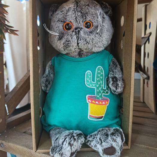 Басик в песочнице с кактусом