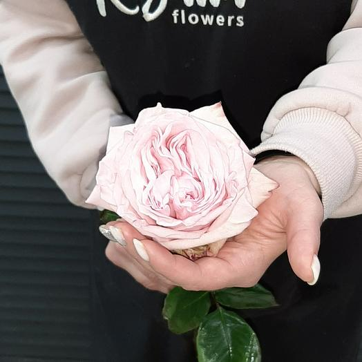 Роза пионовидная Пинк Охара 60 см