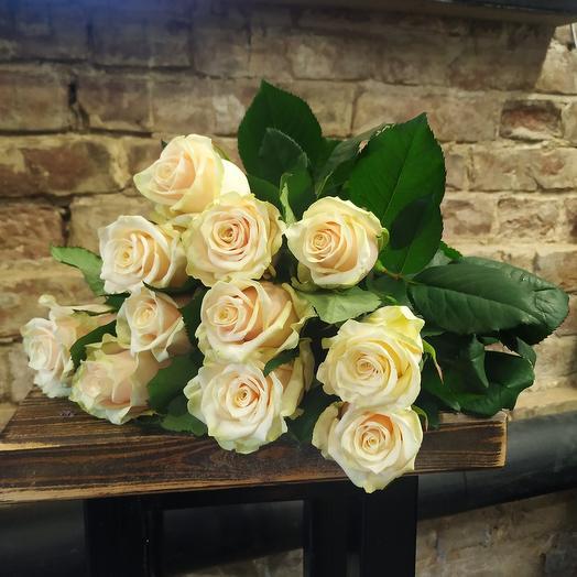Роза Талея 11