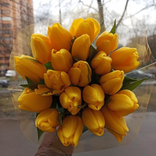Букет из 19 крупных тюльпанов