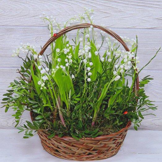 Лесное чудо: букеты цветов на заказ Flowwow