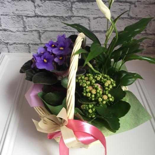 Корзинка с горшечными цветами: букеты цветов на заказ Flowwow