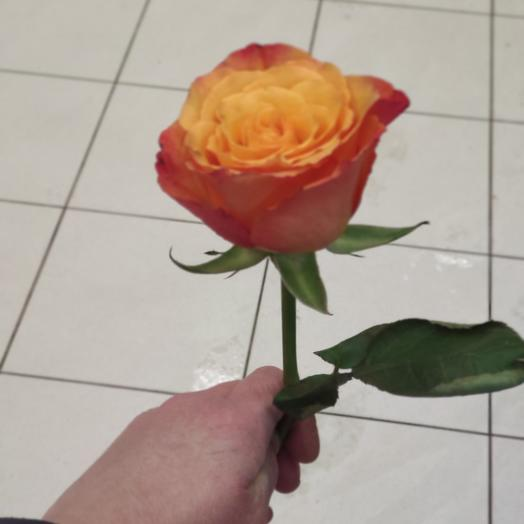 Роза крупная 50см