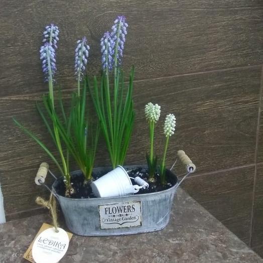Мускари: букеты цветов на заказ Flowwow