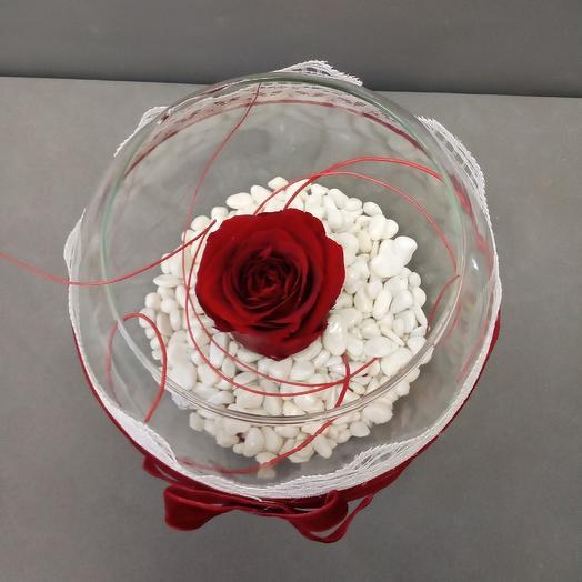 Стабилизированная роза в вазе