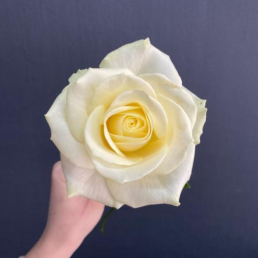 Ароматная Белая Роза 70см