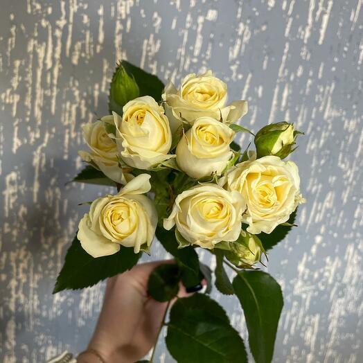 Роза белая кустовая