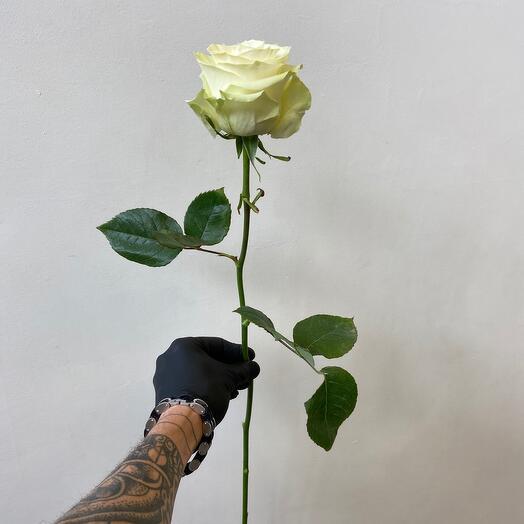 Роза Эквадор Мондеаль