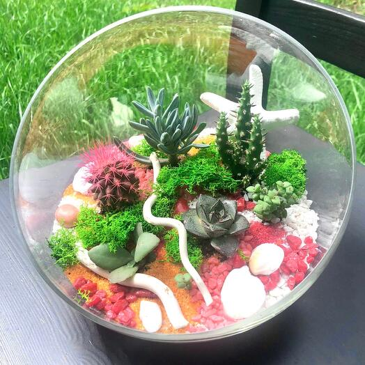 Large florarium with cacti and succulents
