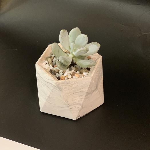 Суккулент в бетоне: букеты цветов на заказ Flowwow