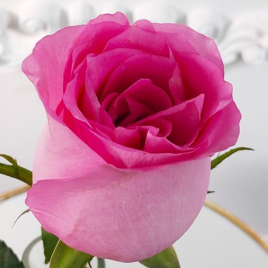 Крупноголовая Розовая роза Ревиваль(коробка конфет в подарок, условие в описании)