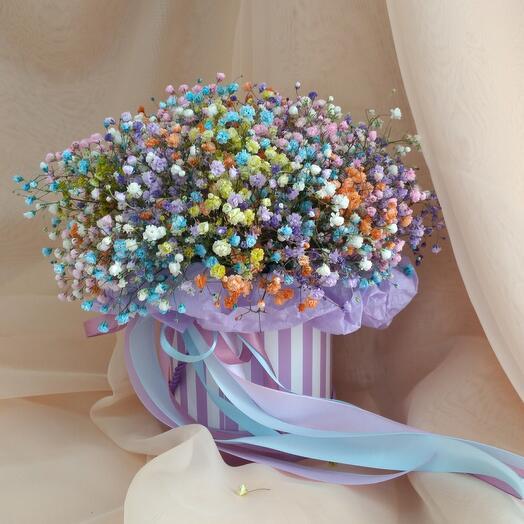 Rainbow hypsophila